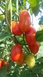 有機無農薬野菜11