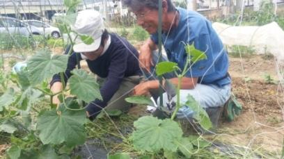 農業学校実習個別指導